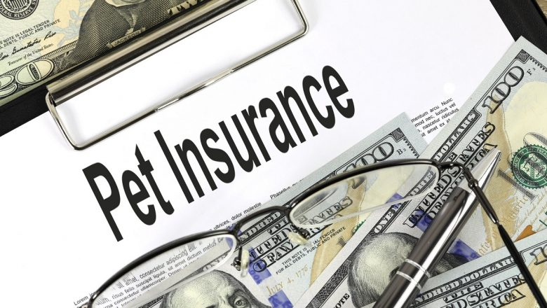 Do you want to buy pet insurance?